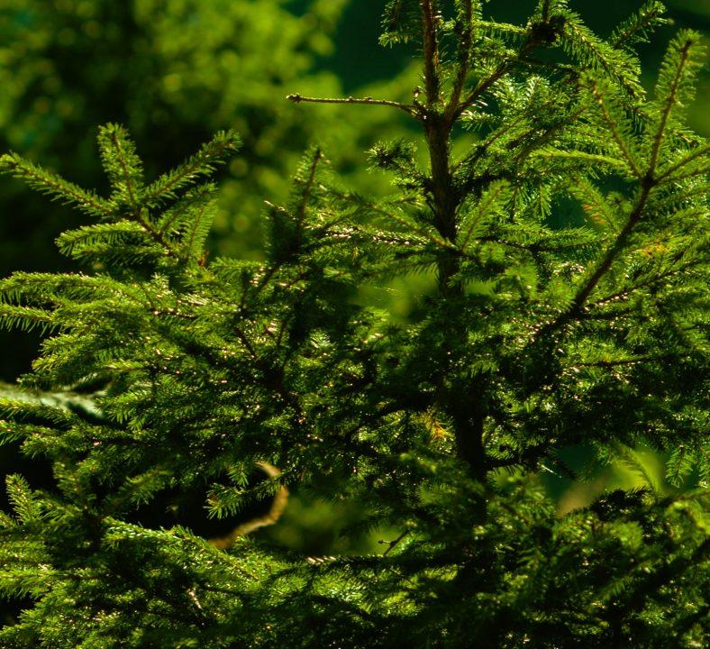 Nachhaltiger Weihnachtsbaumschmuck